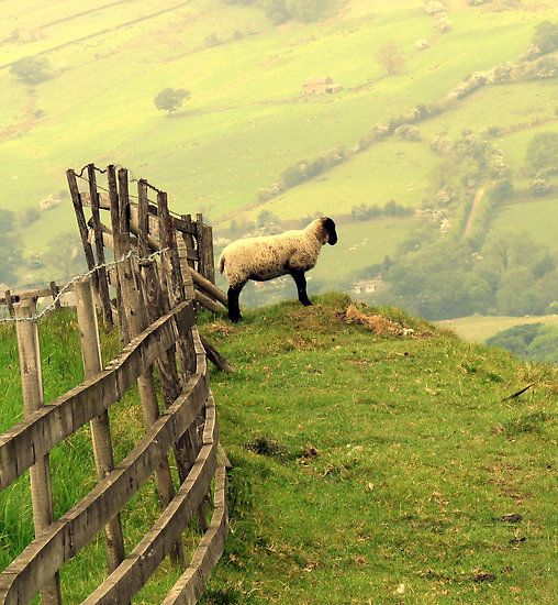 Ooops!: Fence, Dreams Places, Kate Towers, The View, Yorkshire Dale, Country Living, Country Life, English Countryside, Animal