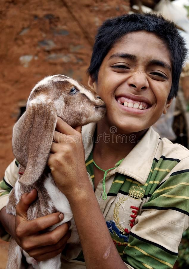 Baby Goat Kissing A Boy A Baby Goat Is Kissing And Playing With A