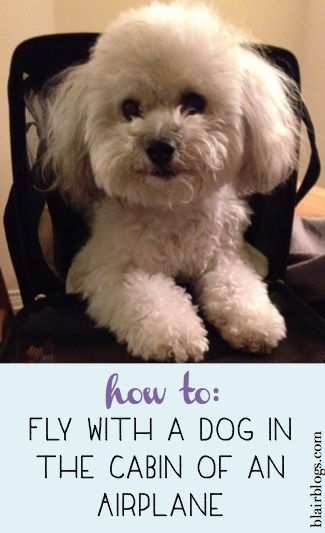 How To: Fly With a Dog in the Cabin of an Airplane | Blair Blogs