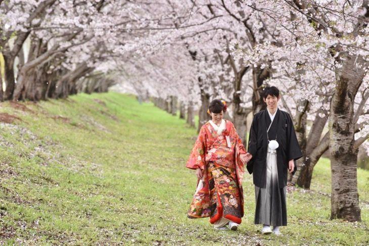 pre wedding photo shoots with kimono at sakura in Japan.  白無垢や色打掛けの和装で結婚式の前撮りロケーションフォトを桜で撮影