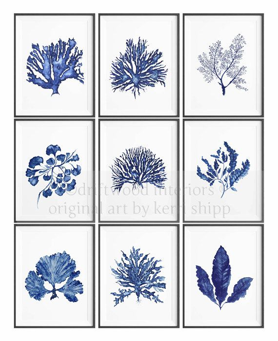 Seaweed II in Denim Blue Watercolor Print by driftwoodinteriors