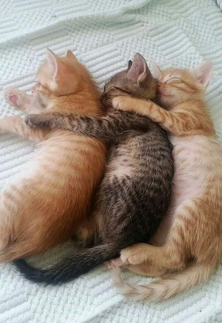 Pin Von Jeannette Auf Katzchen Cats Baby Katzen Babytiere Katzen