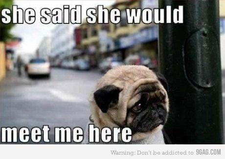 My heart broke a little: Sad Faces, Funny Dogs, Pug-Dog, Pet, Cute Pugs, Pugs Puppys, Dogs Owners, Pugs Life, So Sad