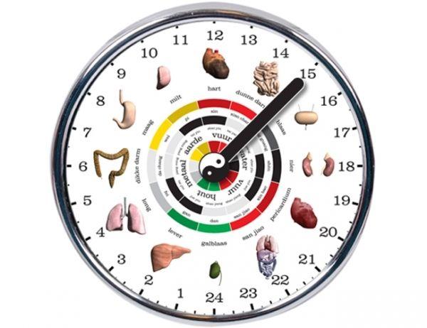 L'orologio degli organi: Ecco gli orari migliori per le nostre…