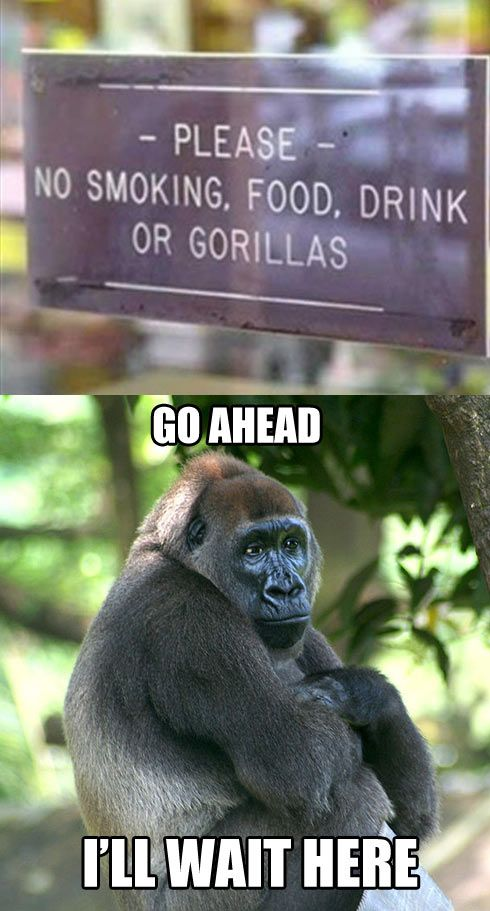 I laughed way too hard at this.: Laughing So Hard, Funny Pics, Funny Signs, Funny Pictures, Poor Guys, Funny Stuff, So Funny, Poor Gorilla, No Friends Funny