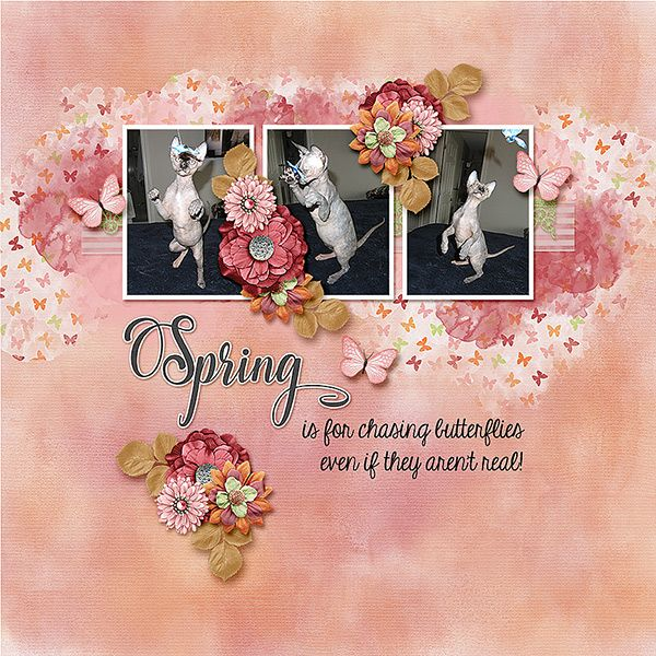 Our Sphynx kitten, Chloe      Kit and Template - Monthly Mix: Let Spring Begin - GingerBread Ladies      http://store.gingerscraps.net/Monthly-Mix-Let-Spring-Begin.html