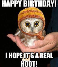 a43937b507799f4f8956b34e3af2a0b8 baby owls baby animals best 25 cat happy birthday meme ideas on pinterest happy,Birthday Meme Animal