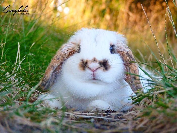 Fluffy bunny! @yummypets #mylela #rabbit