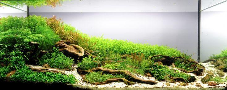 Planted Tank Roots by Papanikolas Nikos - Aquascape Awards