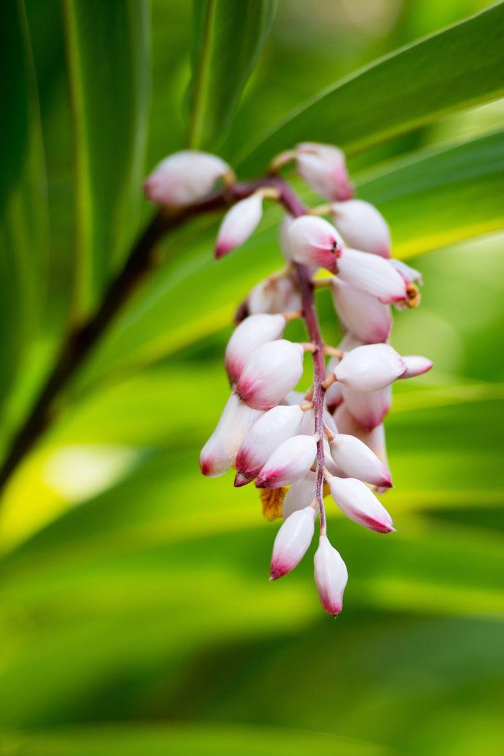 Orchideario de Soroa by Davide Manzoni  on 500px