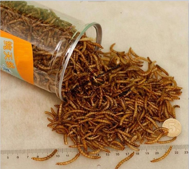 [Visit to Buy] 660ML Mealworm Dried Aquarium Tank Pond Fish Reptile Wild Bird Food Hamster Birdseed Lizard Turtle Arowana Tenebrio Chicken Feed #Advertisement