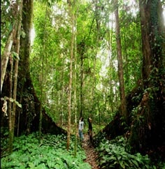 Tawau Hills National Park, Sabah Borneo. Some easy but none the less beautiful trekking