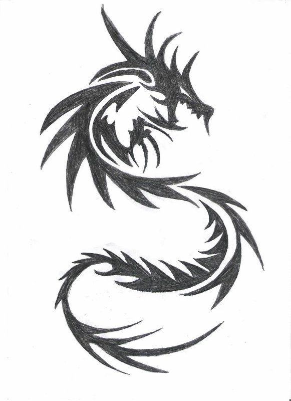 Photos dragon dessin tribal | Art | Dragon tattoo designs ...