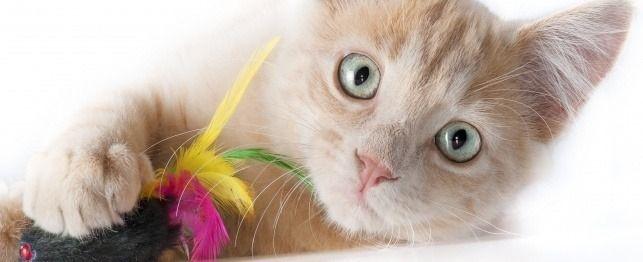 Best Mouser Cats