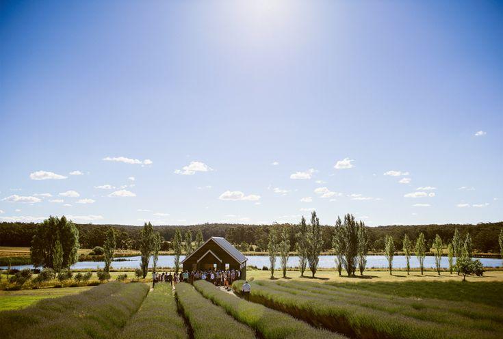 Daylesford wedding at Sault lavander farm. Perfection. www.shaunguestphotography.com.au