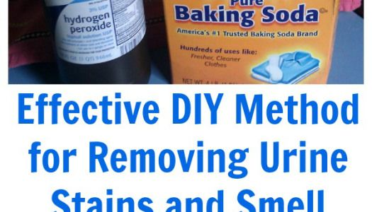 Effective DIY Method for Removing Urine Stains and Smell {Recipe}