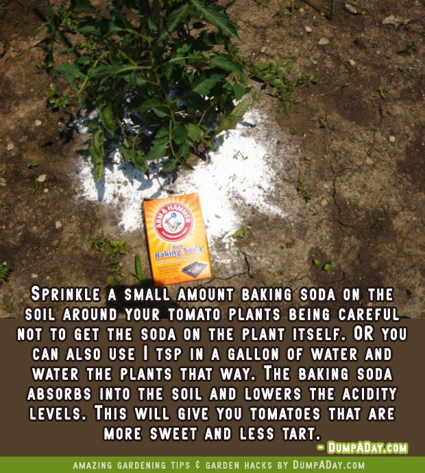Dump A Day Top 20 Uses For Baking Soda You Probably Never Knew About