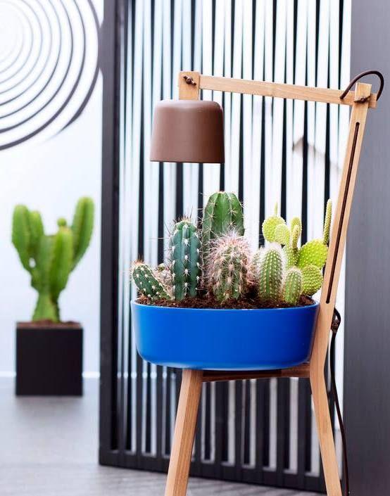 21 best \Hiver images on Pinterest Flowers, Lights and Plants - ideen für küchenwände