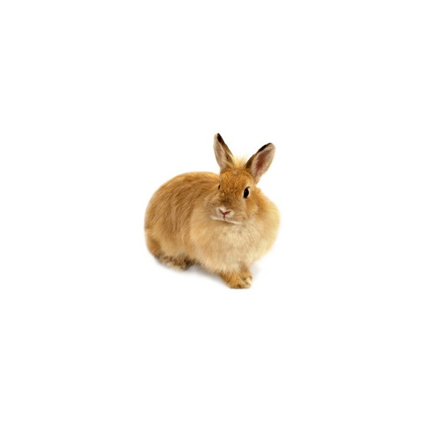 Pet Rabbit Care, Bunny Information, Facts & Pictures found on Polyvore
