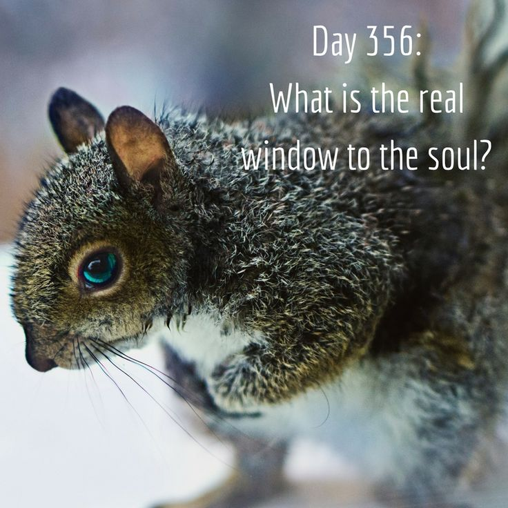 Day 356 of 365 Days of Writing Prompts: What is the real window to the soul? Shannon: I've always thought you can tell a lot about how a person is feeling by watching their hands. People can easily…