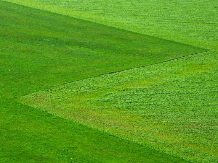 Najpiękniejsze ogrody – trawa ozdobna do ogrodu, trawa dekoracyjna, trawnik #trawa #trawnik #trawa #ozdobna #ogród #ogrody #ogrodnictwo #zielen #trawka #pomyslu #aranzacje #zdjecia #ogrodu #piekne #najpiekniejsze #garden #gardeners #grass #flower #ideas #summer #spring #best #photos #photo #picture #green #house #home #decor