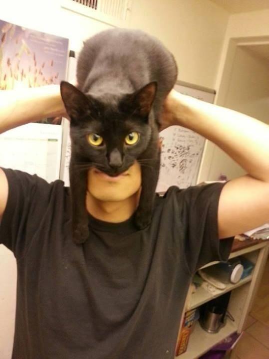 Meet Catman. | How To Look Like Batman Using Your Cat
