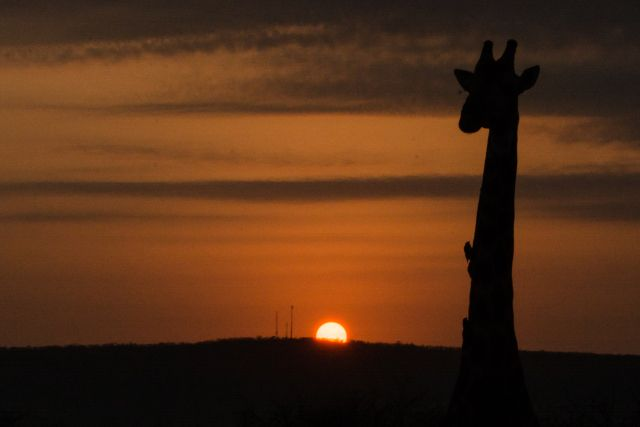 South Africa! #lion #cheetah #leopard #rhino #giraffe #baboon