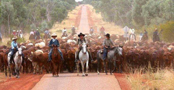 Harry Redford Cattle Drive, Australia