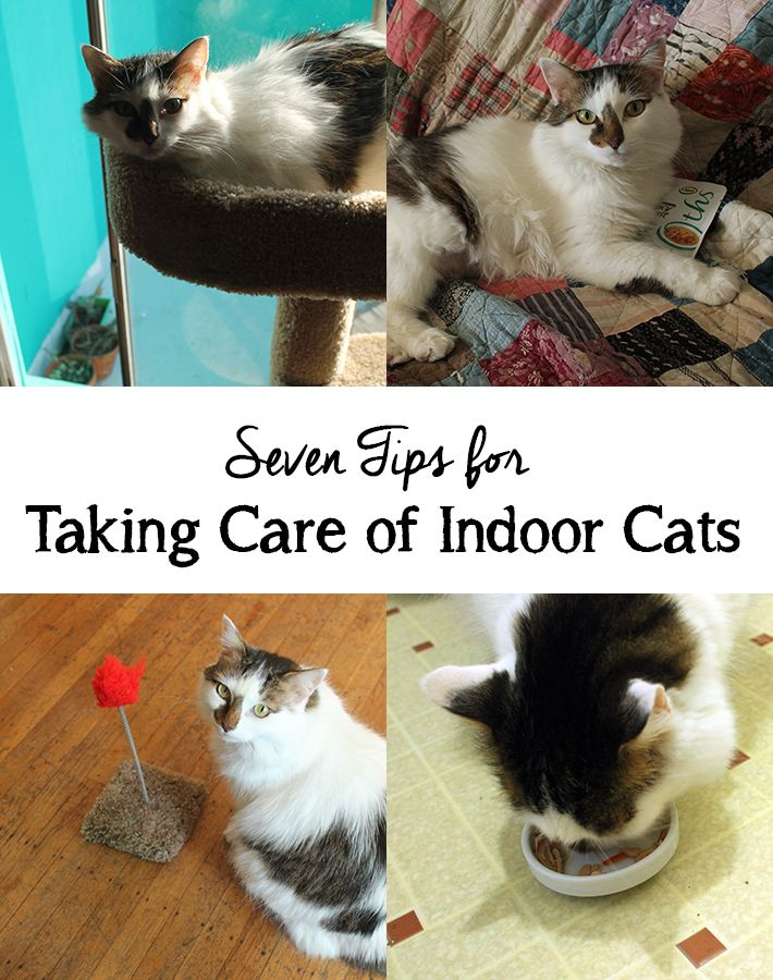 Maybe you think your indoor kitty's life is simple, but you'd be wrong. I'm sharing seven tips to help make sure they're healthy and happy.