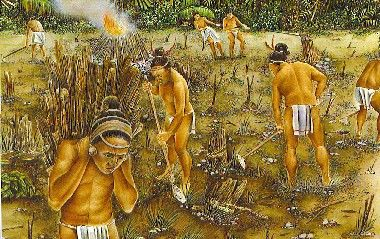 The Mayans practiced 'slash and burn' agriculture. They cut down an area of forest and burned the trees. They Mayans sowed lots crops in May and harvested them in November. However after a few years the soil would lose all its fertility. The farmers would then 'slash and burn' another part of the forest. Meanwhile the abandoned area would become overgrown again.