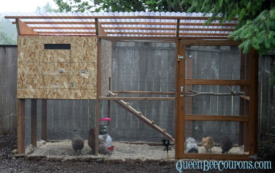 Chicken coop source coupons