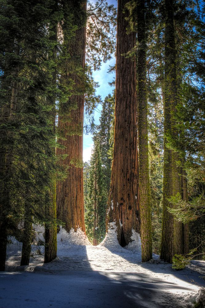 A Light in the Sequoia Forest (California) by Glenn Gilbert on 500px