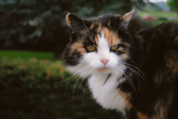 Kittie.