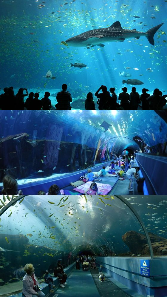 The Georgia Aquarium in Atlanta is home to over 500 different species and 100,000 animals!