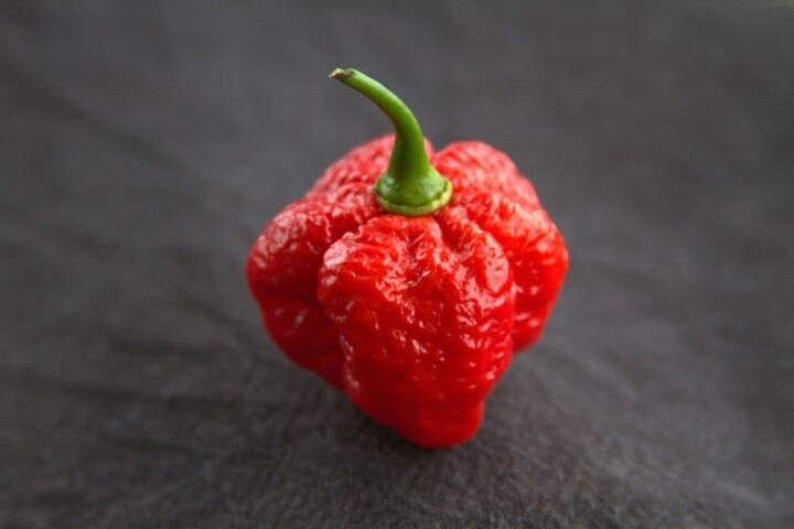 My organic Trinidad scorpion morouga blend chilli (in colour with no effects)