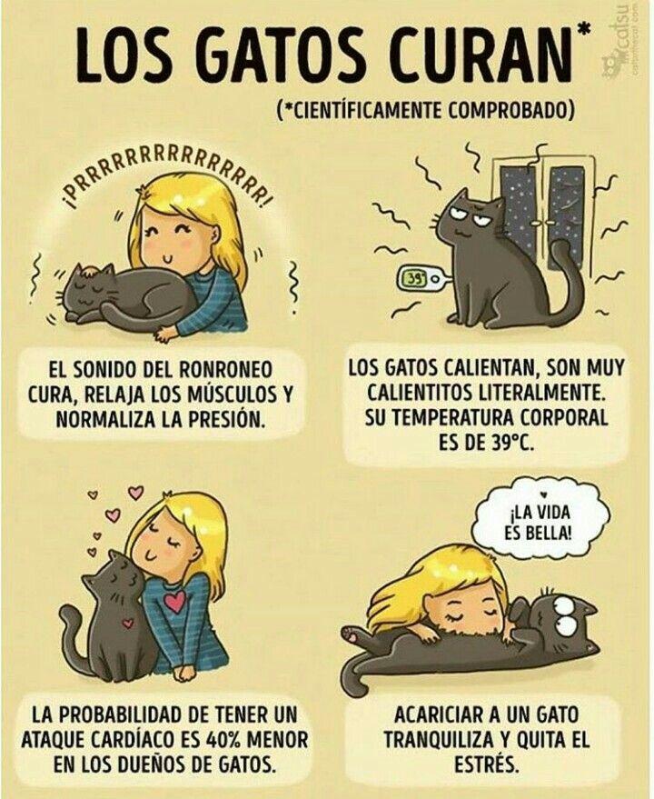 La mejor medicina un gato....jaja