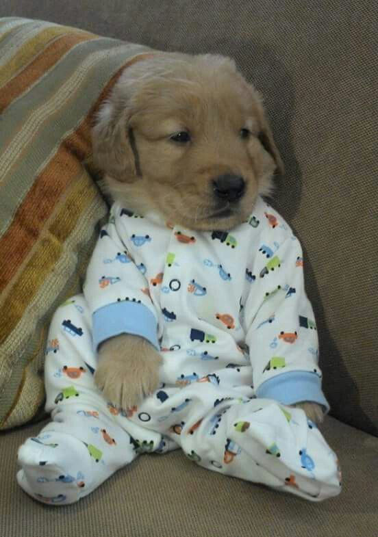 Maybe I should just buy a puppy and dress it in baby clothes to cure my baby…