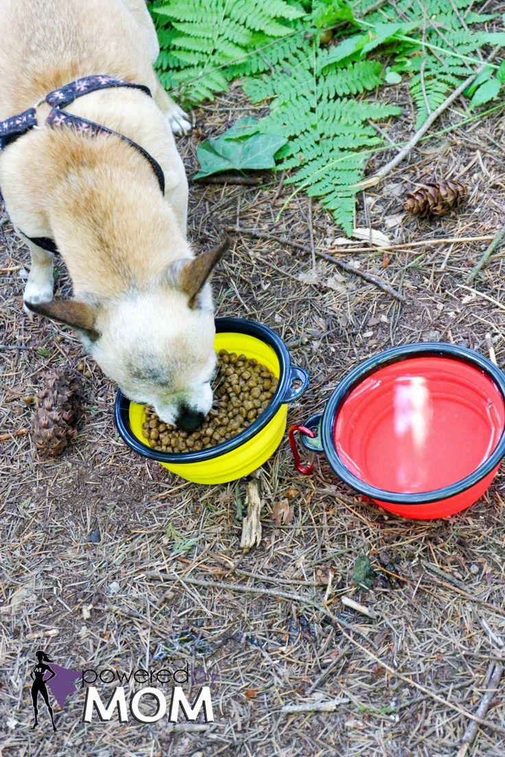 Keep your dogs hydrated this summer with these collapsible dog bowls