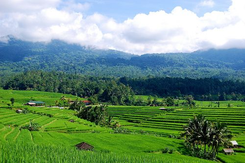 On Landscapes - Part 1: Why are landscapes important? by Peter Holmgren, CIFOR
