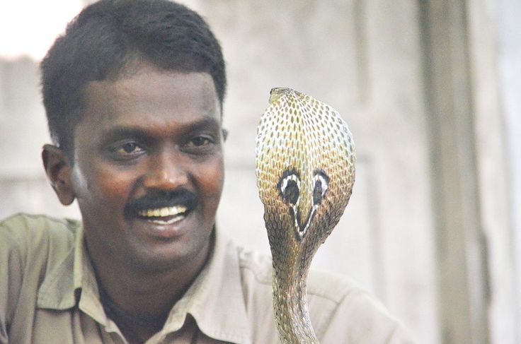 http://ift.tt/2uPqI32 that a Indian wildlife conservationist is on a mission to save snakes that stray in to human inhabited areas even though he was bitten 300 times by venomous snakes and bitten more than 3000 times by all types of snakes during the process.