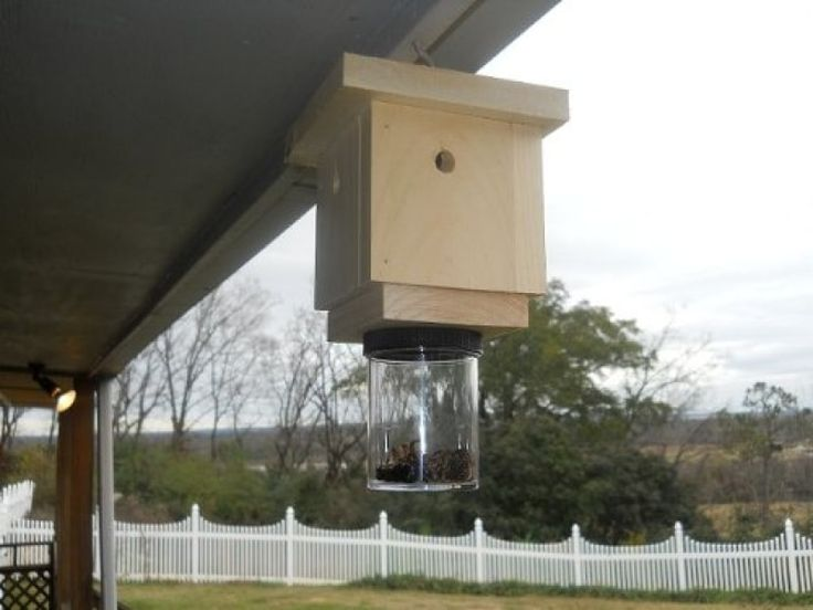 How to Get Rid of Carpenter Bees: Top 3 Best Carpenter Bee Traps