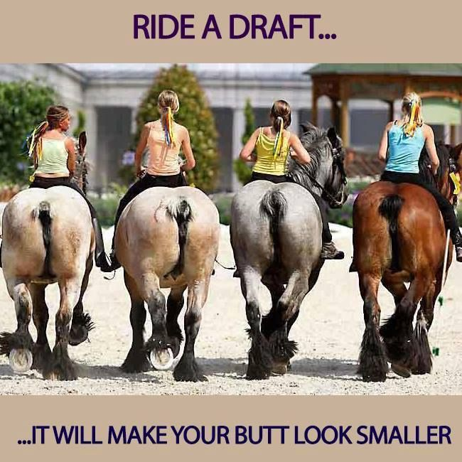 Ride a draft horse--it'll make your butt look smaller! #Horse #Funny