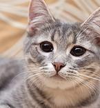 nochnoy-ohotnik | Рыся 7 мес. Активная, игручая. Здорова, не привита, отдается под стерилизацию. http://priuyt.wix.com/nochnoy-ohotnik#!-/c1cn3