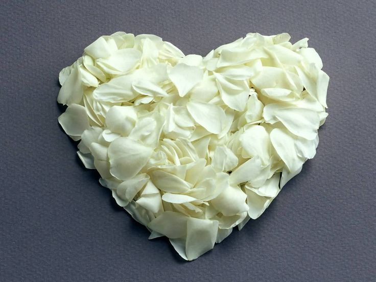 white roses are my favorite:)