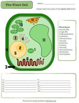 A printable worksheet of a plant cell for students to practice and test their knowledge. Can be used as a classroom activity or as a quiz or homework. Both a color version and a black and white printer friendly version are are included.- Answer key included.- Bonus PowerPoint slides included (ppt and pptx)- Bonus image files included (transparent png)- Color and Black and White vector files also included (eps and svg files) which can be modified with a program like Adobe Illustrator or…
