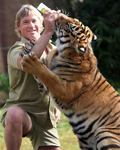 ♡♥Steve Irwin - aka - also known as - the 'Crocodile Hunter' feeds a tiger with his right arm in jeopardy with 2 tiger paws on it -  click on pic to see a full screen pic in a better looking black background♥♡