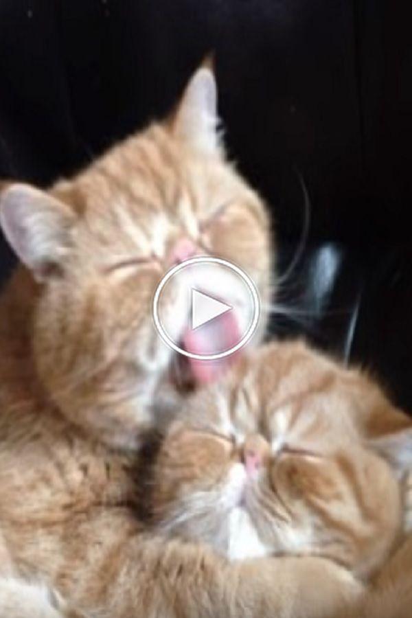 Pin On Cat Stock