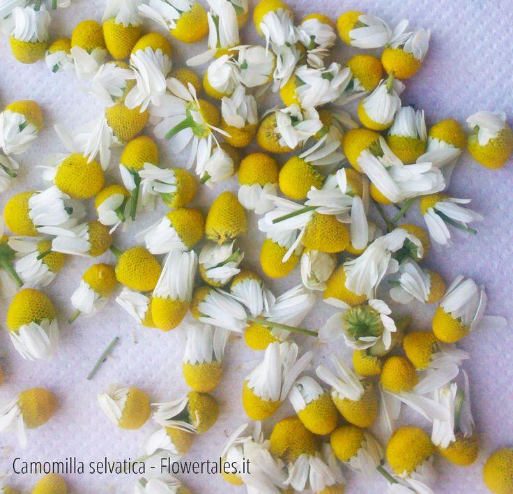 camomilla: essiccare le piante officinali - Flower Tales: cosmetica naturale fai da te