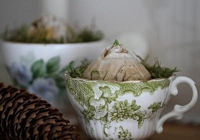 Knollen in Moos und hübschen Tassen, Tannenzapfen
