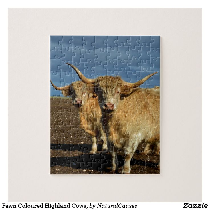 Fawn Coloured Highland Cows, Jigsaw Puzzle